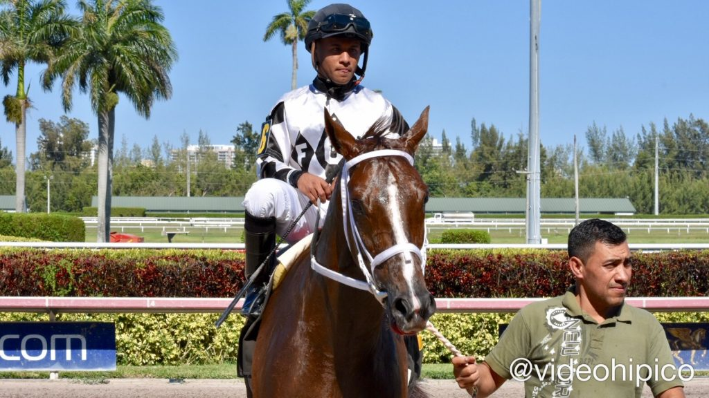 Gulfstreampark Regal Kitten Gets His 4th Consecutive Win