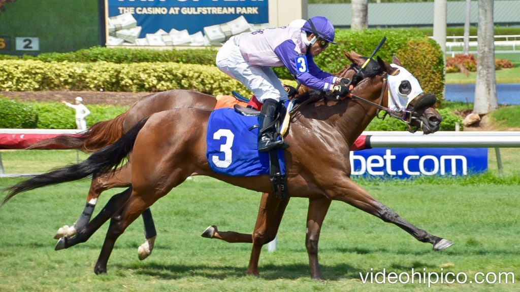 Gulfstreampark 6th Race 6ta Carrera 2017 7 16