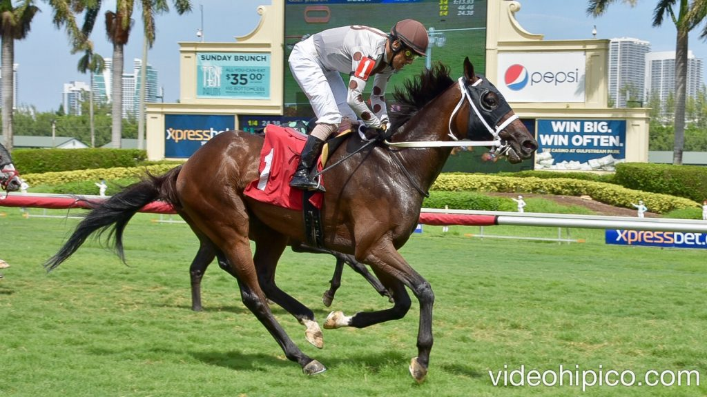 Gulfstreampark 7th Race 7ma Carrera 2017 9 2